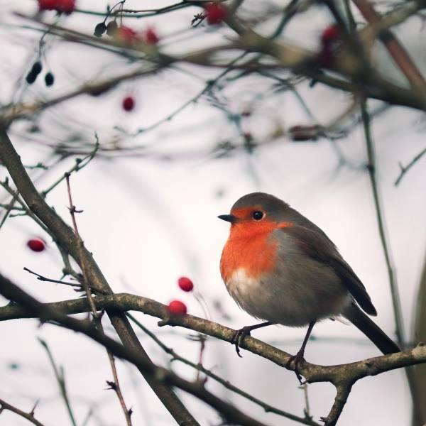 Nature at your doorstep